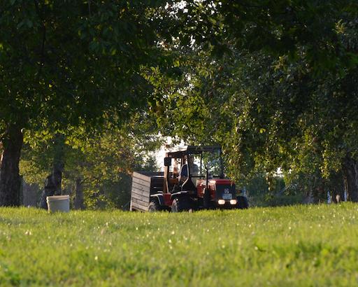 Traktor in Apfel Allee auf der Gerstetter Alb