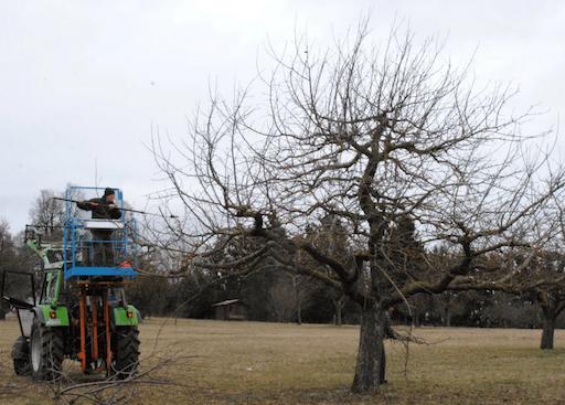 Apfel Baumschnitt auf der Gerstetter Alb